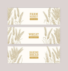 Collection web banner templates with wheat ears vector