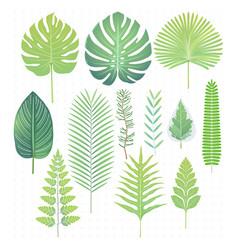 Green tropical leaves set vector
