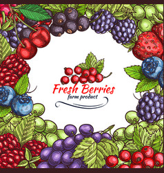 natural berries sketch poster vector image