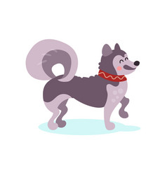 siberian husky dog character colorful vector image