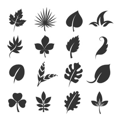 Tree leaf silhouettes Leaves vector