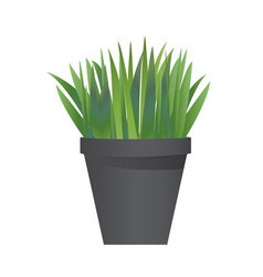 grass with pot vector image vector image