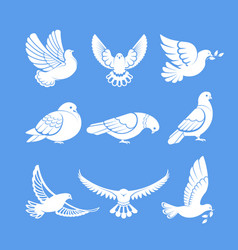 Pigeons or white dove birds flying wings vector