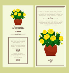 greeting card with begonia plant vector image