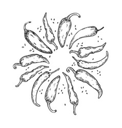peppers engraving vector image