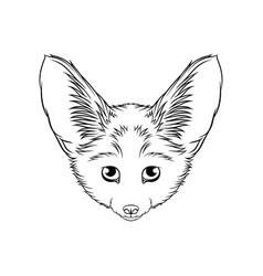 sketch of desert fennec fox head portrait of vector image