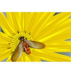 Yellow flower and colored fly vector