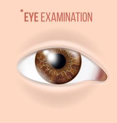 human eye vision concept clinic medical vector image