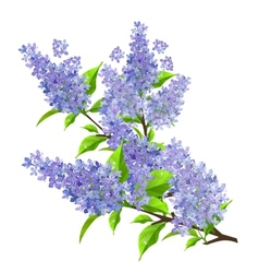 Branch of lilac with leaves isolated vector image