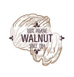 100 percent organic walnut in shell and edible vector image