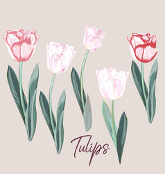 collection hand drawn tulips vector image