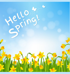 hello spring poster with narcissus vector image