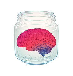 human brain in glass jar isolated vector image