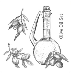 Ink hand drawn olive oil set vector image