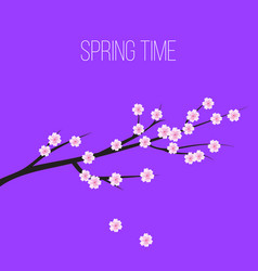 sakura blossom flowers background vector image