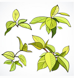 set branches with fresh green leaves vector image