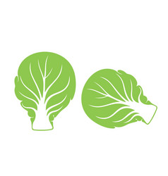 brussels sprout vector image vector image