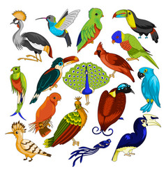 big set of exotic birds vector image