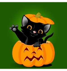 cat in pumpkin vector image