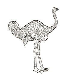coloring ostrich bird for adults vector image vector image