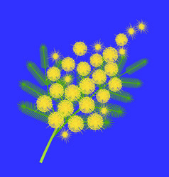a branch of mimosa international womens day vector image