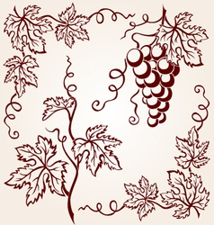 set from vine vector image vector image