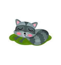 adorable raccoon sleeping on green grass wild vector image