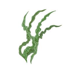 Spirulina alga leaves edible seaweed vector