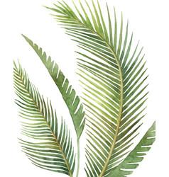 watercolor arrangement tropical leaves vector image