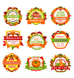 autumn nature badge set with leaf and pumpkin vector image