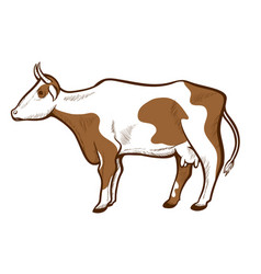 cow white with brown spots hand drawn icon cattle vector image