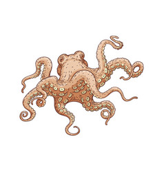 hand drawn designed octopus beige sea element for vector image