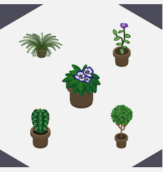 Isometric plant set of flower peyote flowerpot vector