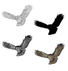 an image of a flying owl vector image