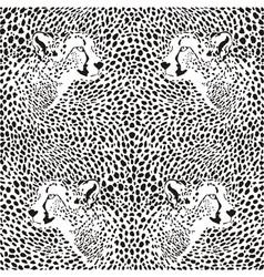 cheetahs background vector image
