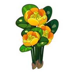 Blooming yellow nuphar lutea isolated vector
