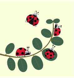 cute ladybirds walking on stem a plant vector image