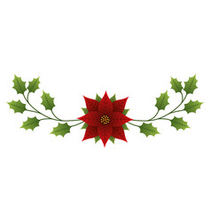 christmas flower poinsettia evergreen foliage vector image