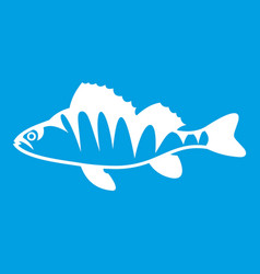 European perch perca fluviatilis icon white vector