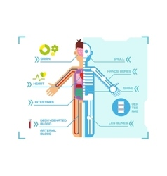 Human Body Anatomy Infographic Flat Design on Blue vector