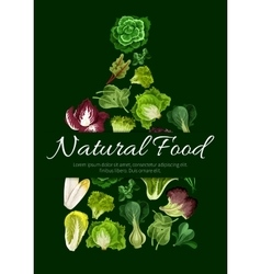 Natural food poster of leafy salad greens vector image