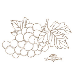 outline hand drawn grapeflat style thin line vector image