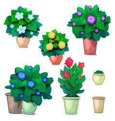 set decorative plants in pots and red tulips vector image