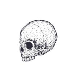 skull t-shirt print vector image