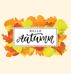 hello autumn banner template vector image