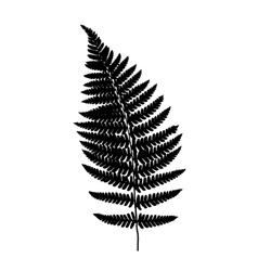 Fern frond balck silhouette vector image