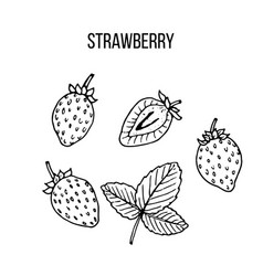 berry hand drawn collection strawberry vector image