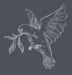 Dove or pigeon with olive branch flying isolated vector