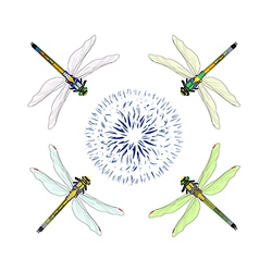 Dragonfly with flower vector image