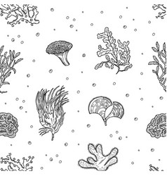 hand drawn seaweed pattern or background vector image